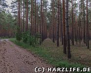 Nutzholzplantage
