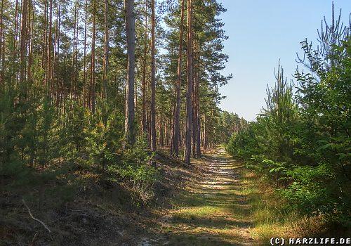 Im Waldgebiet Heers