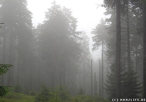 gespenstiger Nebel umhüllt Bäume und Felsen