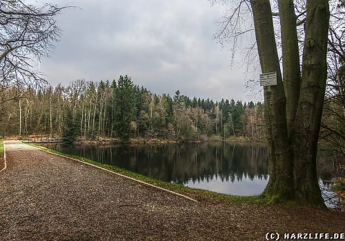Der Bergrat-Müller-Teich im Harz