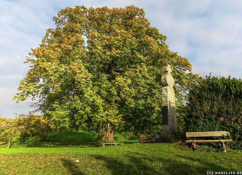 Naturdenkmal Lindenbaum nahe der Burgruine