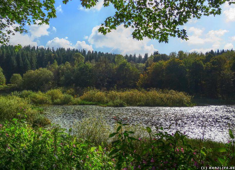 Blick vom Ostufer über den Eulenspiegler Teich zur Bremer Höhe