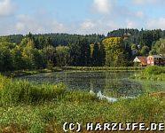 Ausblick zum Eulenspiegler Teich