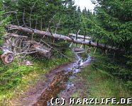 Forstmeister-Sietz-Weg
