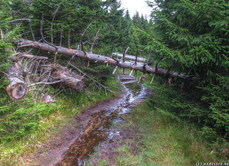 Der Forstmeister-Sietz-Weg