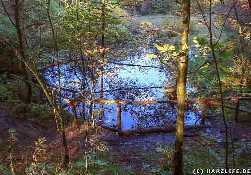 Feuchtbiotop am ehemaligen Kleinen Prinzen-Teich
