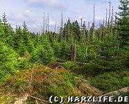 Naturdynamik am WaldWandelWeg