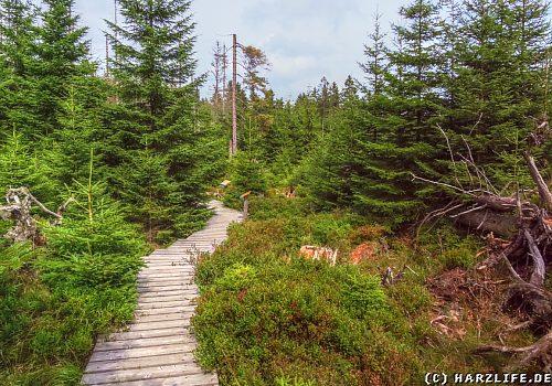 Der WaldWandelWeg