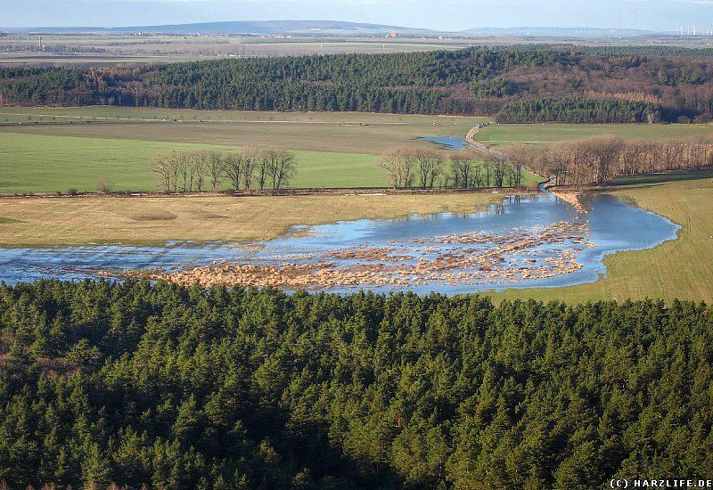 Goldbach mit Hochwasser