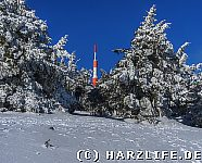 Brocken Winterwald