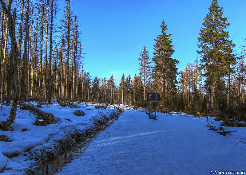 Winter im Harz - Goetheweg mit Abbegraben und Loipe