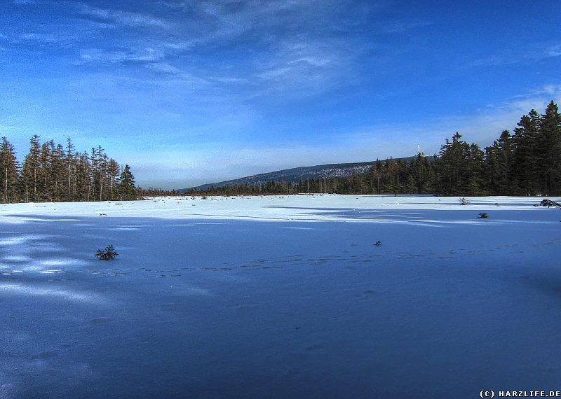 Am Goetheweg - Das Große Torfhausmoor im Winter