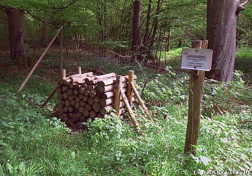 Am Köhlerweg / Köhlerpfad