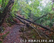 Windbruch auf dem Wanderweg