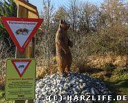 Ein ''Honigbär'' im Bienenschutzgebiet