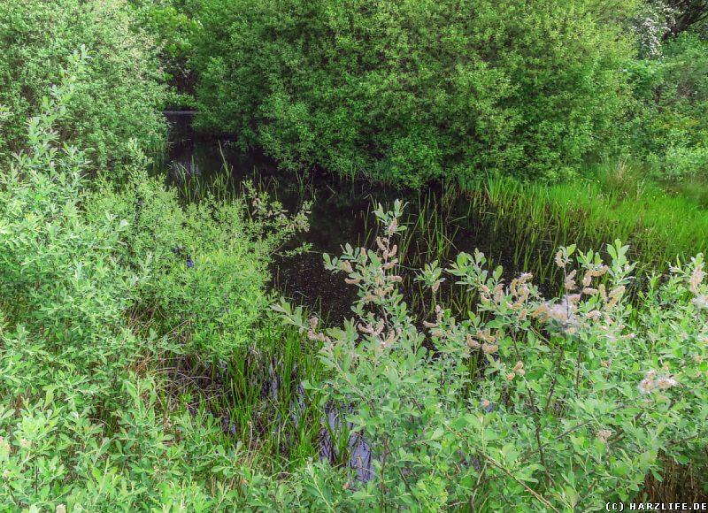 Ein kleiner Erdfallsee im Naturschutzgebiet Hainholz
