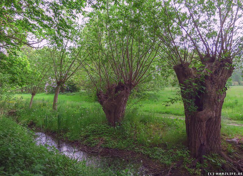 Alte Weiden am Barrenbach