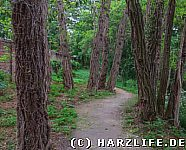 Skurrile Bäume am Wegesrand